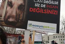 sosyopet / Evcil hayvanlar için kurulan ilk sosyal ağadır.
