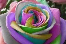 O Mundo das Rosas.