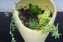 Jardín => Terrarios y miniaturas