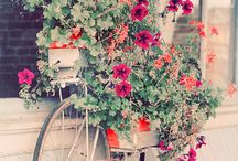 Flowers & Home & Balcony / Home, design, garden, flowers, balcony
