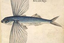 Botanica fish