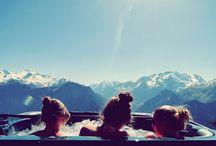 ski / by Jill LeBlanc