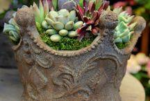 Beautiful Plants / Plants i hope not to kill :)