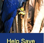 Parrot Rescue / Parrot rescue, adoption, and conservation organizations.