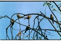 Birds / by Shara