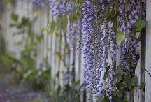 Into the garden…