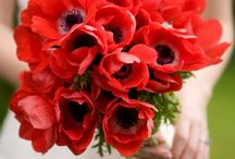 Flowers! / by Priya Ollapally