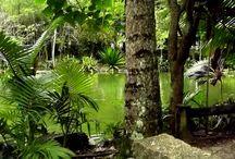 Parque Ecológico do Córrego Grande-2012 (Fpolis/SC) / Pequeno parque próximo da UFSC - vale para passeios.