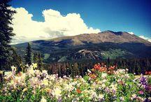 We love Breck!!!
