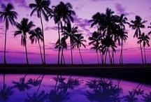 Purple / by Rhonda Glumac