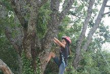 ARRAMPICATA / treeclimbing