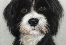 Terrier portraits