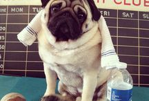 sarah likes pugs / The best dogz / by Sarah Dapul-Weberman