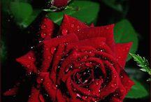 아름다운 꽃....