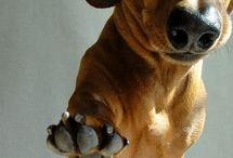 dashund