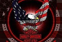 Harley / by Debbie Warren