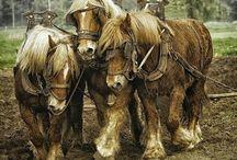 powerhorses