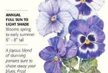 Botanical Interest - Pansy Seeds