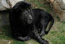 Animals rare