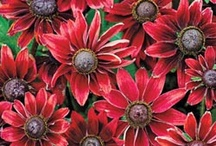 Flowers / by Christine Carboneau