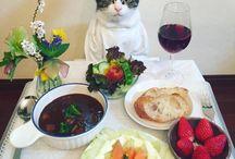 猫の料理人