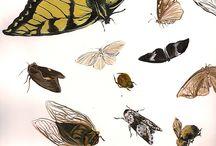 Scientific Illustration / Biological & Medical Illustration
