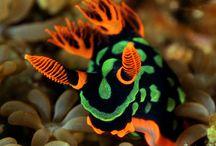 nudibranquios