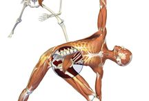 Yogastillinger anatomi