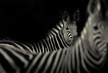 Dan Dugmore Photography / My Darling!