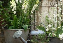 záhrada