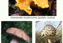 Mushroom picking in Poland