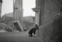 I heart Bears / by Mollie Berg