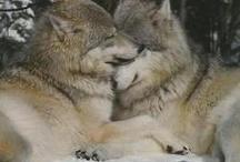 gorgeous wolves / :D