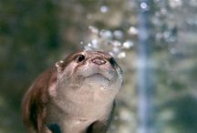 you otter believe it