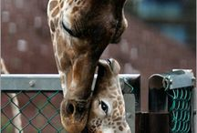 Adorable Animals!