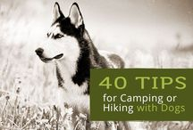 Dog Hiking & Camping Tips / Tips for hiking and camping with your dog (especially small dogs). Because what is better than that??