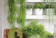 Zimmer Garten