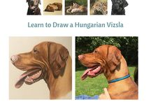 Learn to Draw a Hungarian Vizsla / Learn to draw a Hungarian Vizsla with pastel.  The course is divided into 5 main sections, with video clips, detailed instructions and a Facebook group where you can share your progress and receive further support.  Although there is no specified time given to the course, it will probably take about 25 hours to complete.  The focus is on learning to draw without any aids such as grids, tracing etc, so the skills taught in this course will be valuable for drawing in general.