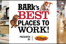 Bark's Best Places to Work presented by Zuke's / We're seeking the most dog-friendly companies in America - your company could win a year's worth of Zuke's treats! / by Zuke's Pets