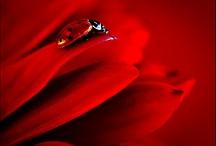 Red! / by Rebecca Raige