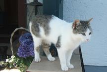 Katzengeschichten / Katzenerlebnisse auf dem Bauernhof und Landurlaub Bayern