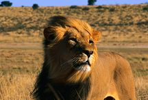 Trophy Hunting Around the World / by The International Fund for Animal Welfare - IFAW