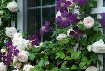 Il mio giardino ideale / Lavoretti fai da te e piccole sculture