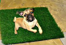 Alternative uses for artificial grass / Different ideas for artificial synthetic grass