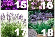 çiçek bakımı bahçe düzenleme