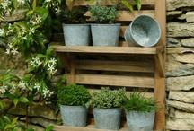 Garden Inspiration / by Joan Ingalla-Cruel