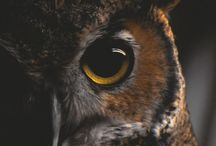 Owls and Other Animal Totems / Owls and animal totems. Barn owls, owls of all shapes and sizes!