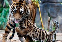 Beautifully cute Animals / Beautifully cute animals