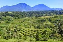 PACUNG RICE TERRACE, BALI