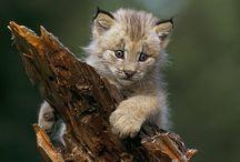 Baby animals / Little friends